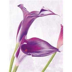 Lienzos para cuadros de flores - Enmarcar lienzo ...