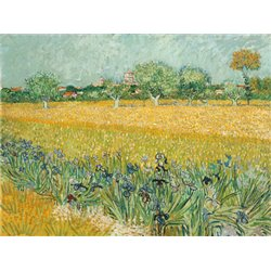 FIELD WITH IRISES NEAR ARLES