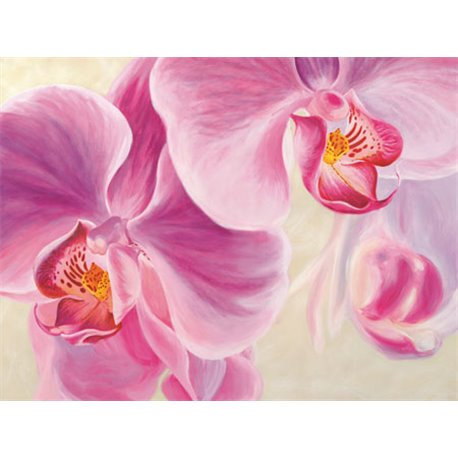 Laminas para cuadros de flores modernos purple orchids for Laminas de cuadros modernos