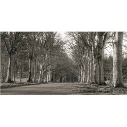 TREE LINED ROAD, NORFOLK, UK