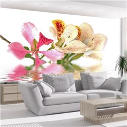 Fotomural Flores tropicales, árbol de las orqídeas (bauhinia)