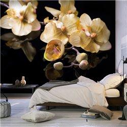 Fotomural Orchids in ecru color