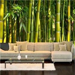 Fotomural Jardín de Bambú