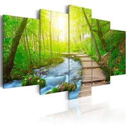 Cuadro Sunny Forest