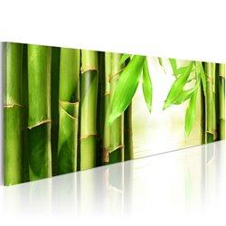 Cuadro Bamboo gate