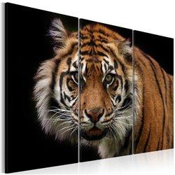 Cuadro Tigre depredador