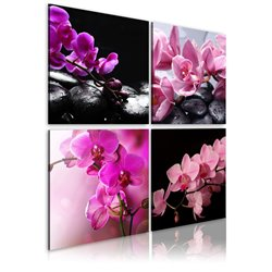 Cuadro Las orquídeas más bellas que nunca