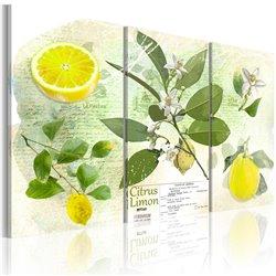 Cuadro Fruta: limón