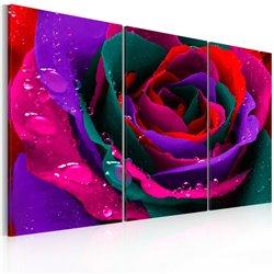Cuadro Rainbow-hued rose