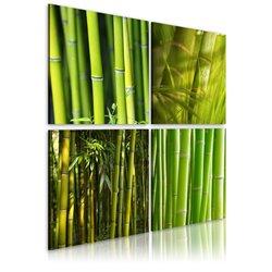 Cuadro Bambúes