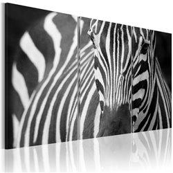 Cuadro La señora Zebra