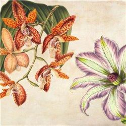 Panneau Botanique V