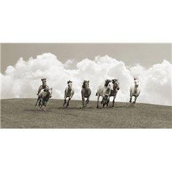 Herd of wild horses (BW)