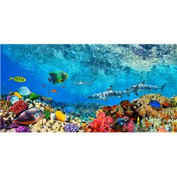 Reef Sharks and fish, Indian Sea