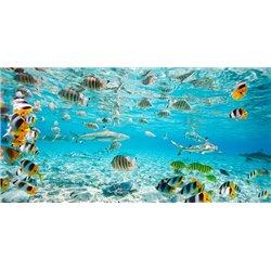 Fish and sharks in Bora Bora lagoon