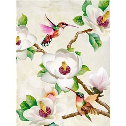 Magnolia and Humming Birds