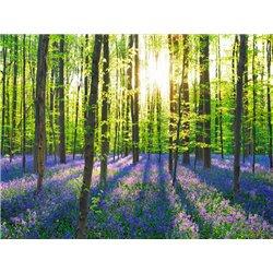 Beech forest with bluebells, Belgium