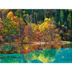 Forest in autumn colours, Sichuan, China
