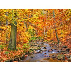 Beech forest in autumn, Ilse Valley, Germany