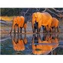 African elephants, Okavango, Botswana