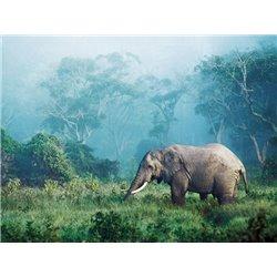 African elephant, Ngorongoro Crater, Tanzania