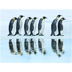 Emperor penguin group, Antarctica