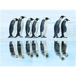 Emperor penguin group, Antarctica