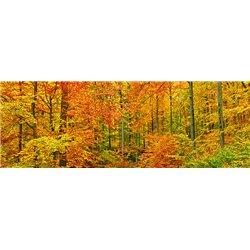 Beech forest in autumn, Kassel, Germany