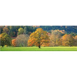 Mixed trees in autumn colour, Scotland