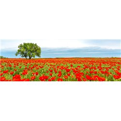 Tree in a poppy field