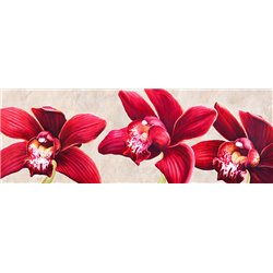Eleganti orchidee