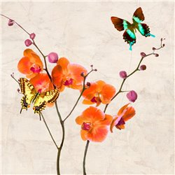 ORCHIDS & BUTTERFLIES I