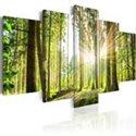 Cuadros de Bosques