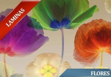 laminas de flores